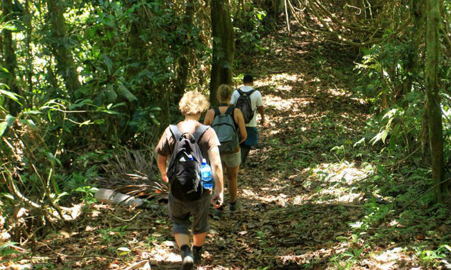jungle_hike_costa_rica1.jpg