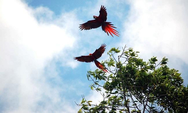 osa_macaws_2.jpg