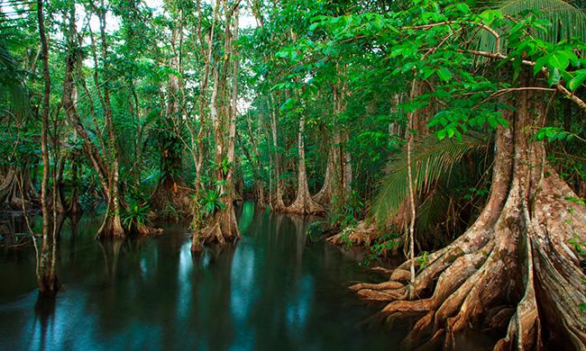 pierdras-blancas-national-park-mangrove.jpg