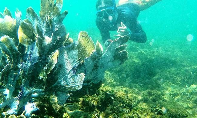 Cahuita Snorkeling Tour